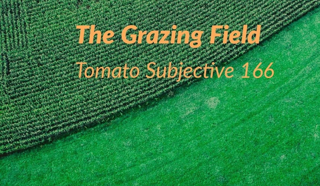 Test of Mathematics Solution Subjective 166 -The Grazing Field